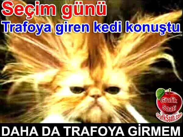 """Seçimerde trafoya giren kedi konuştu """"Daha da girmem"""" Seçim günü trafoya giren kedi konuştu Yazan Tevfik Elçioğlu"""